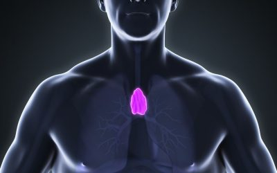 What is Thymus?